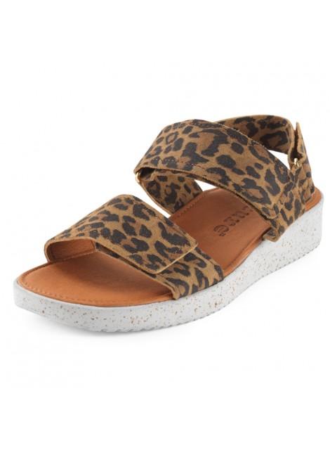 Sandaler leopard. Nature